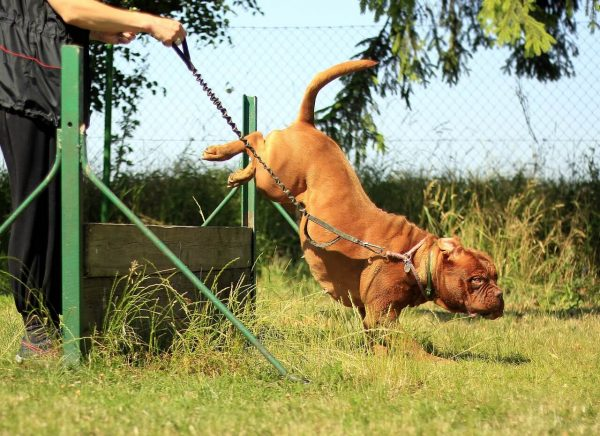 Dog's Training Classes and Its Growing Importance