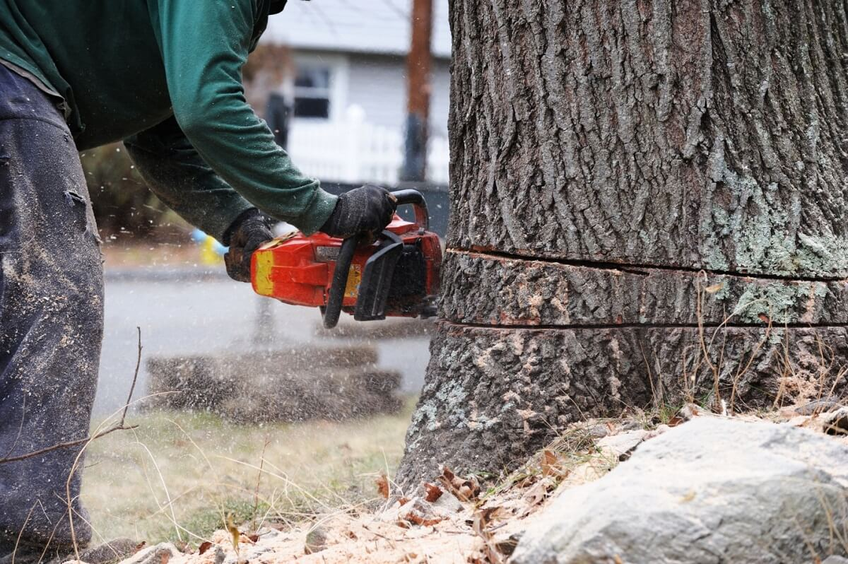 Guide to Tree Cutting
