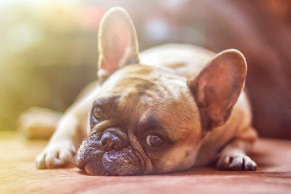 All About Dog Worms and Treatment