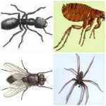 How to Fight Household Pests